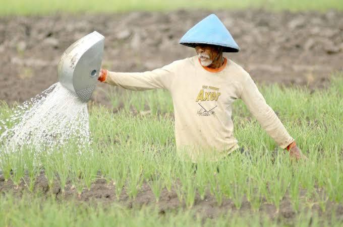 iLUSTRASI : Pemkab Koltim Ajak Petani Menggunakan Pestisida Nabati dan Pupuk Organik