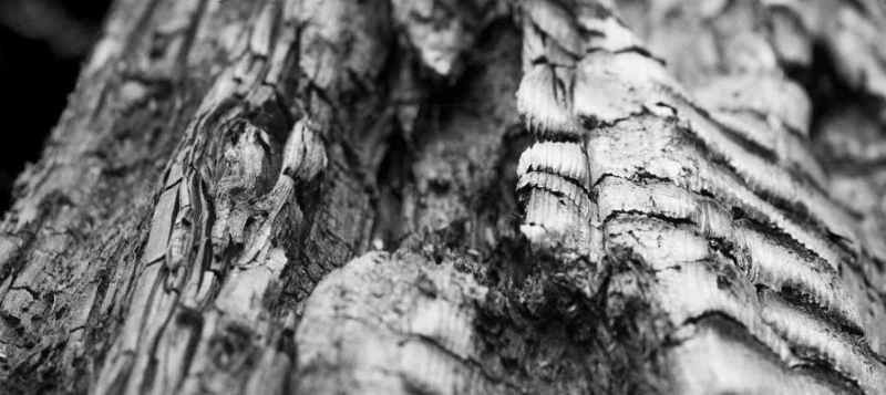 Kamado roštilji najbolje rade s čistim drvenim ugljenom jer se ne stvaraju čestice čađe i tako zagušuju protok zraka