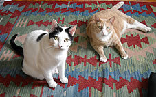 our cats Reuben and Marvin