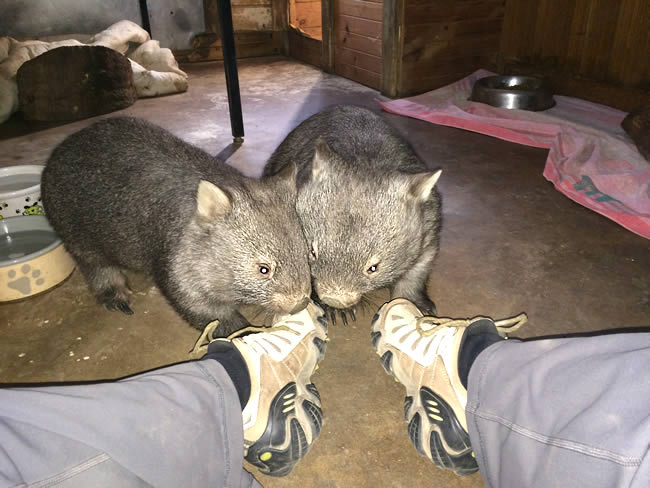 Abram and Panzer gnawing at my shoes