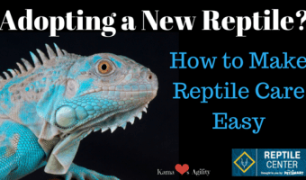 Adopting a Reptile?  How to Make #ReptileCare Easy