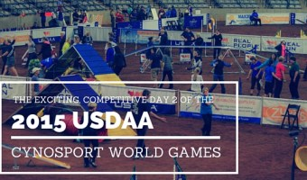 The Exciting, Competitive Day 2 of the 2015 USDAA Cynosport World Games