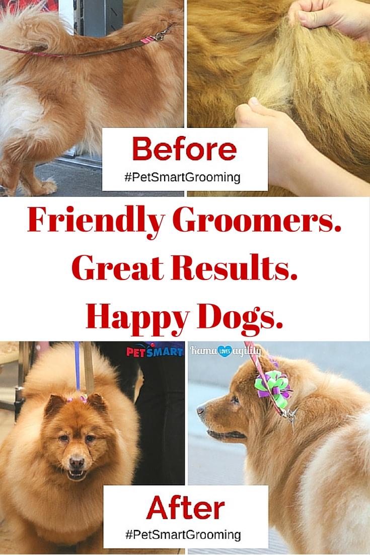 Embrace the Holiday Spirit with #PetSmartGrooming - Kama ... - photo#20