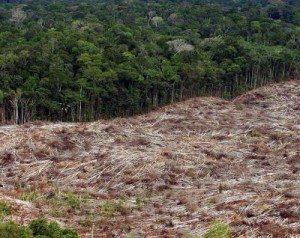 Inteligencia Artificial: desde detectar el cáncer a prevenir la deforestación