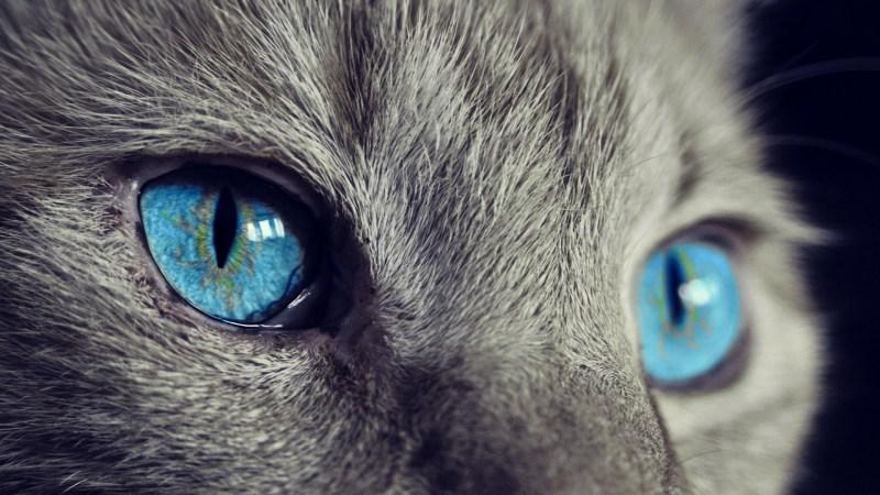 Øyefokus på dyr