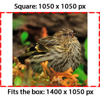 image-example-square