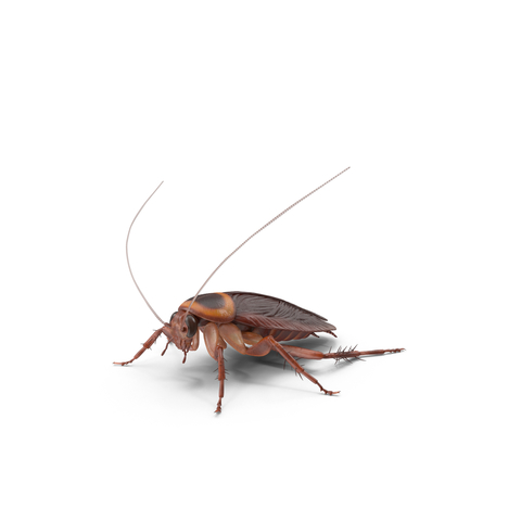 kammerjäger kakerlakenbekämpfung