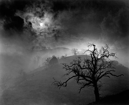 Wynn Bullock, Stark Tree