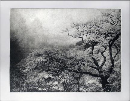 Second Spring, photogravure etching by Peter Miller