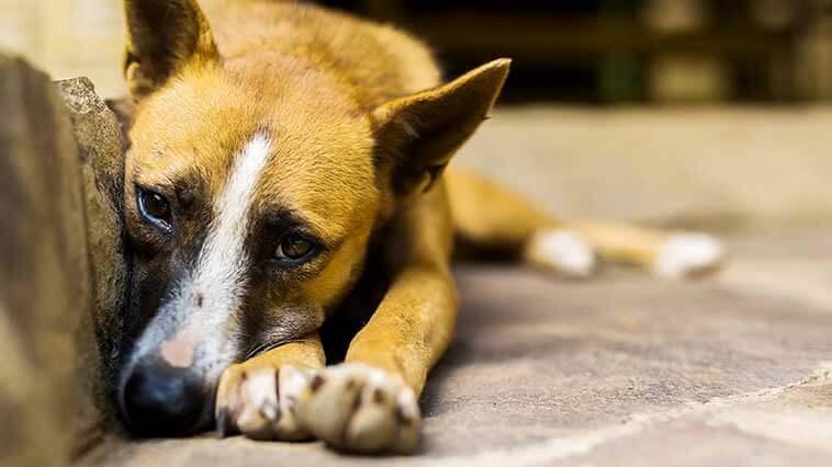 Hayvana eziyet edene 2 yıl hapis cezası