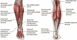 Visual Impact Muscle Building  How to build calves