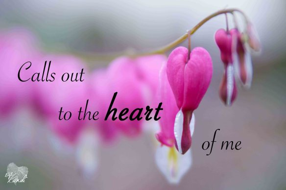 closeup of bleeding heart flowers with the caption calls out to the heart of me