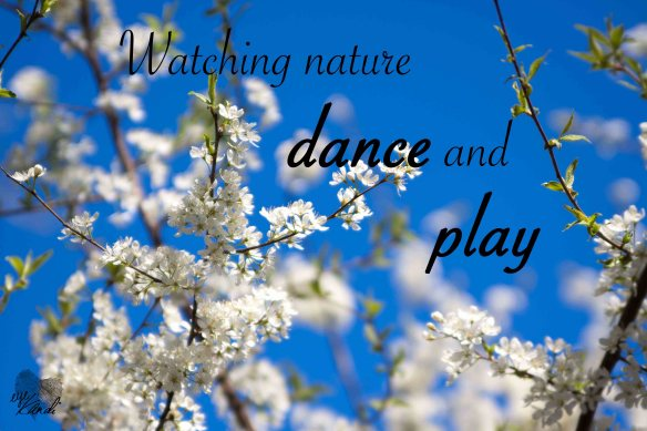 white flowers on a tree and a bright blue sky with the caption watching nature dance and play