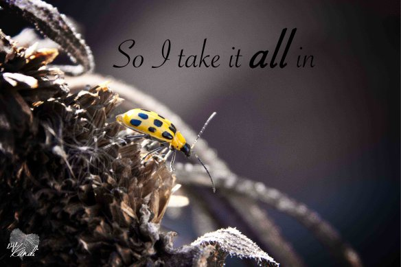 yellow bug on a dried flower with the caption so i take it all in