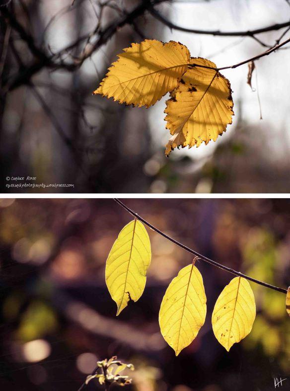 selah_candace_rose_Fall Wonder_1