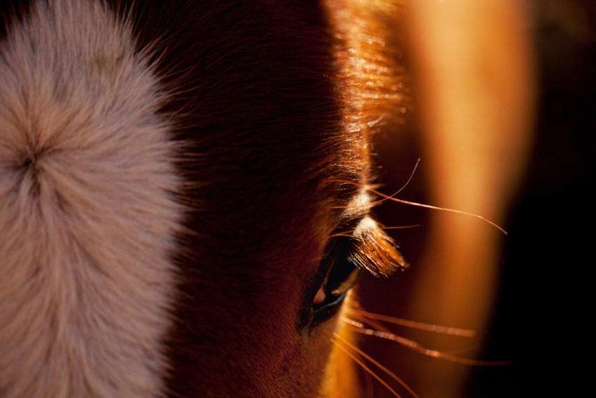 Navajo Nation Horse
