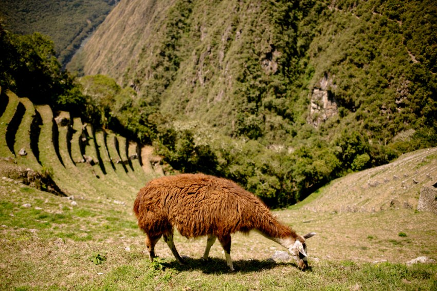 Cusco Inka Trail Machu Picchu Kandise Brown