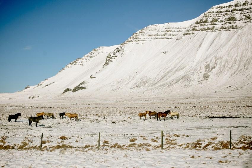 019-awesome-iceland-landscape-photography-kandisebrown2016