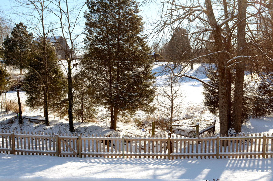 Backyard-view-snow