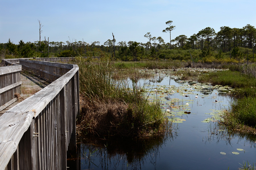 Topsail Preserve - Boardwalk