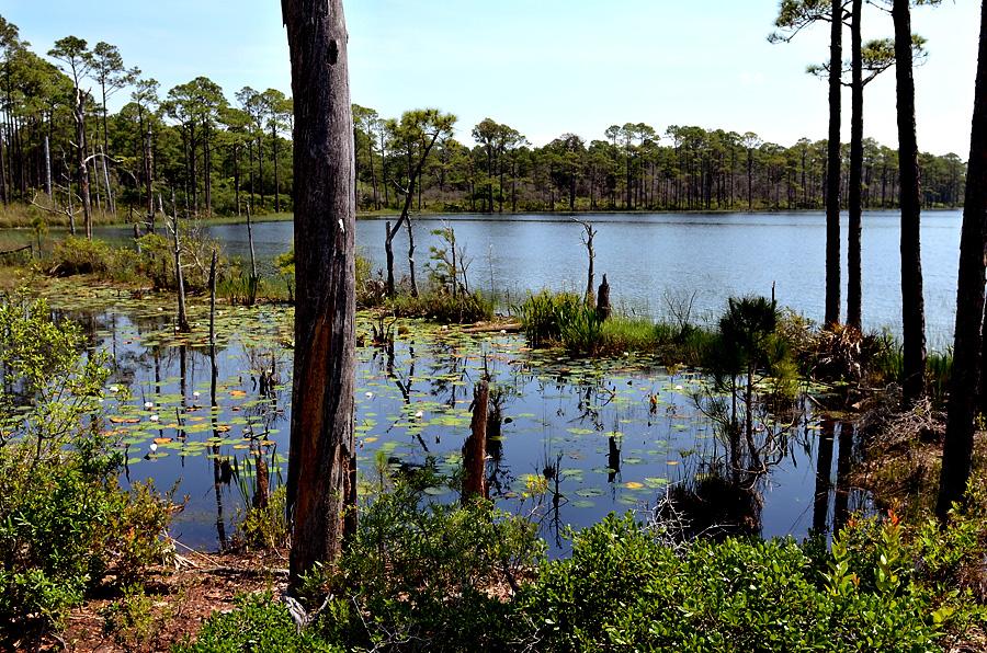 Topsail Preserve Lake