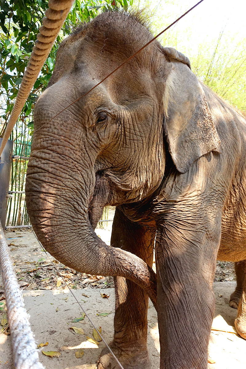 Thailand-WFFT-Bunmi-Elephant-02