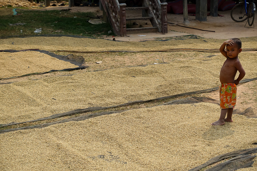 cambodia-drying-rice