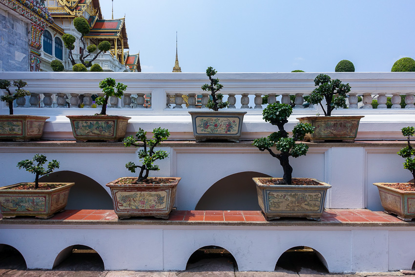 grand-palace-bonsai