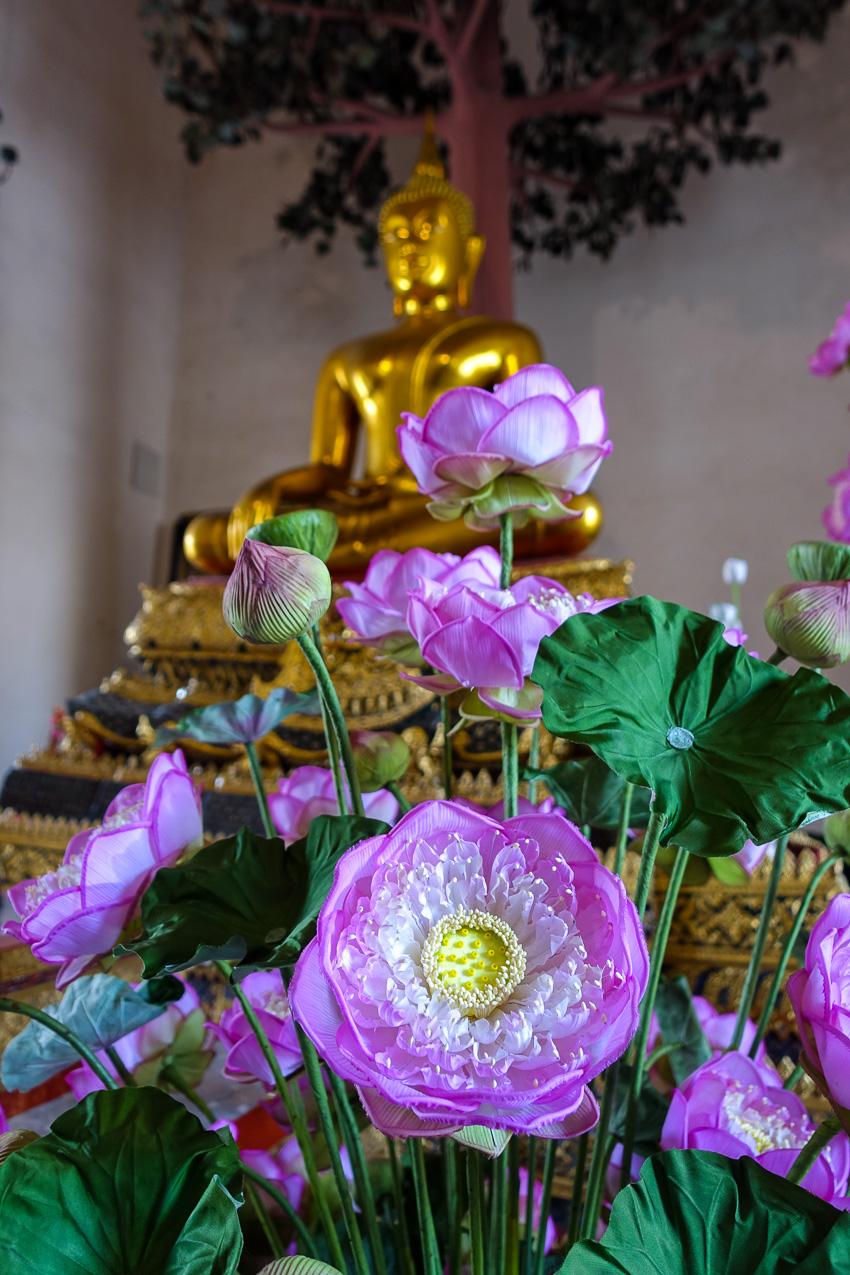 wat-pho-buddha-lotus-flower