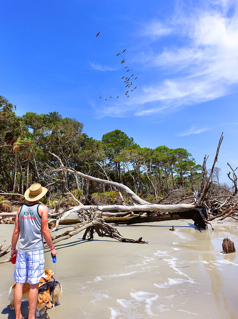 Hunting-Island-State-Park-North-Beach-01