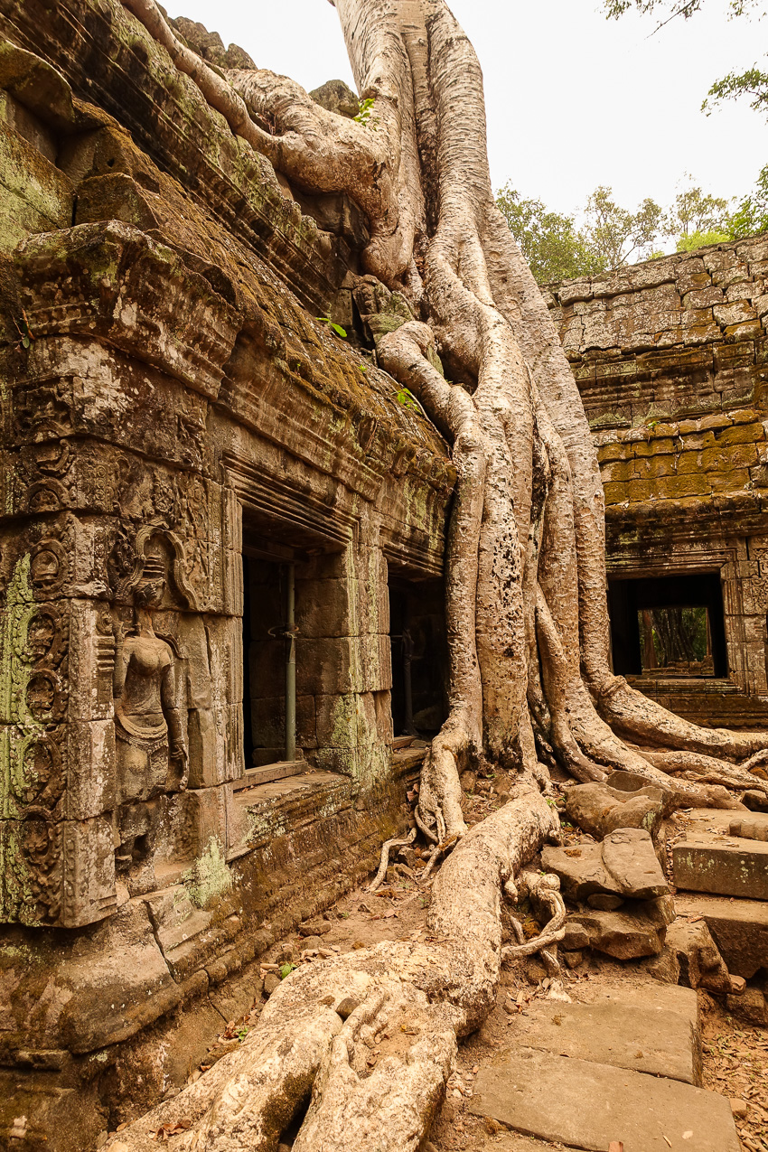 ta-prohm-tomb-raider-tree