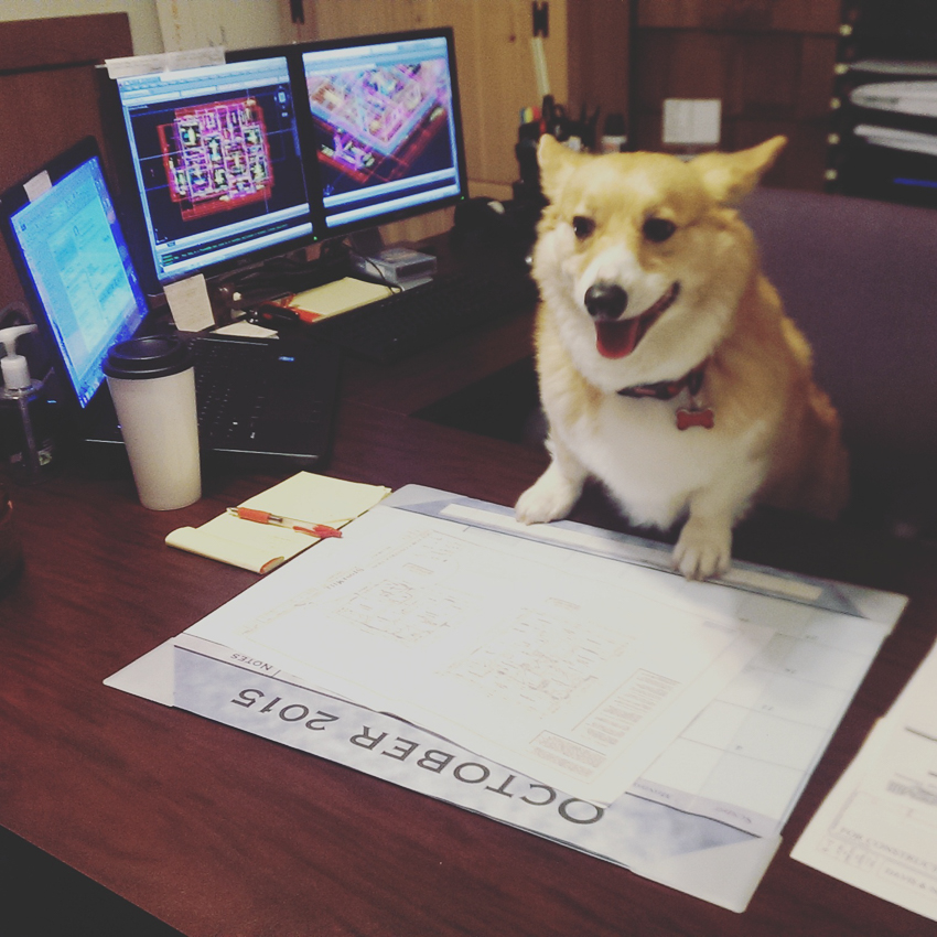 corgi-architect