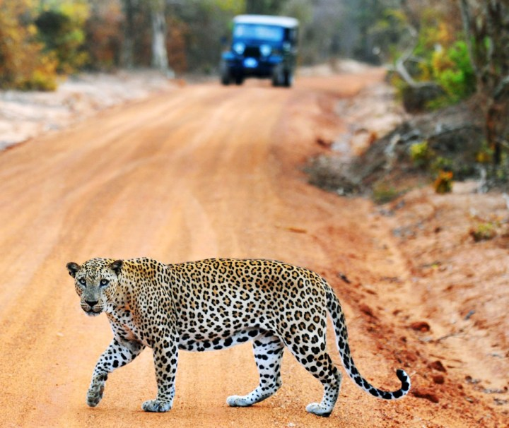 Nature & Wild Life Tour Package in Sri Lanka