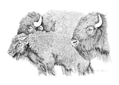 Buffalo by Jeanne Trueax