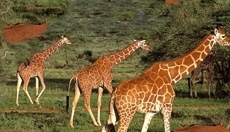 Safari Tours, also beyond Tanzania National Parks