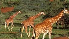 Safari Tours, also beyond Tanzania National Parks