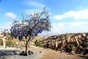 kapadokya yeşil tur (3)