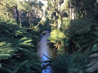 River near the Californian Redwood Forest, The Otways, Great Ocean Road
