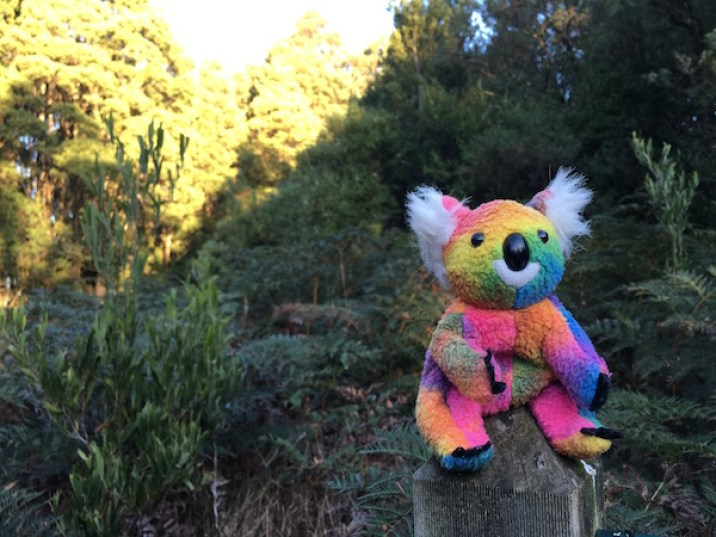 Toy koala in the forest, The Otways, Great Ocean Road