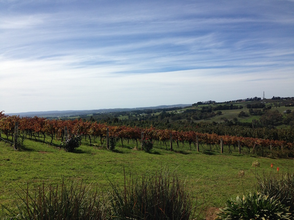 View from Borrodell Vineyard, Grapevines, Towac Valley, Orange Wine Tours