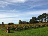 Grapevines, Orange Mountain Wines, Orange Wine Tours