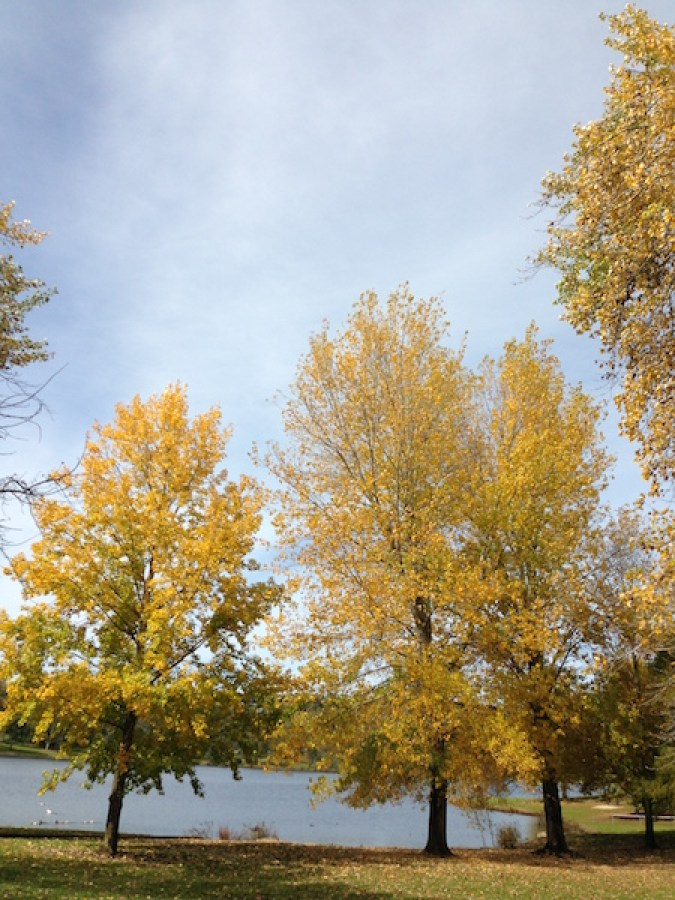 Trees at Lake Canobolas, Orange Wine Tours