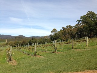 Borrodell Vineyard, Orange Wine Tours