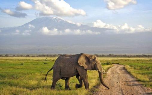 Elephant-in-Amboseli-region-of-Kenya-e1475763785930