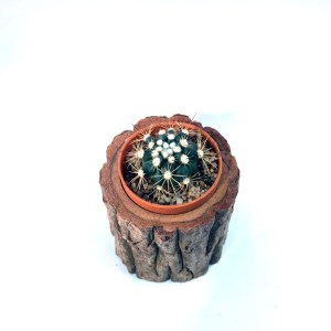 Handcrafted Natural Wood Log Planter(Timber Pot), House, Office, Garden Plant Pot, Unique Pot, Container, 80-mm or 3-inches(Width)
