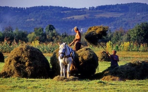 Her gün uluslararası çiftçi mücadele günü olmalı / Adrian Bebb  ve  Ramona Duminicioiu