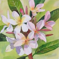 Summer Frangipani in Pink - Waterolour 27 x 27cms