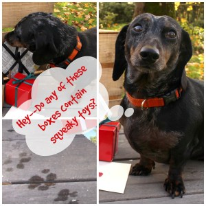 Fausto wanted to help with the photo shoot. **Dachshund not included. Lol!