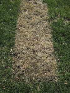 replacement-front-door-2-burnt-grass-2