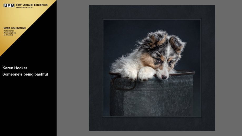 Blue merle, Australian Shepherd puppy sitting in a metal washtub, paws on the edge, head tilted down, peering bashfully at viewer